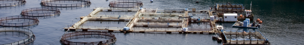 Aquaculture Operations